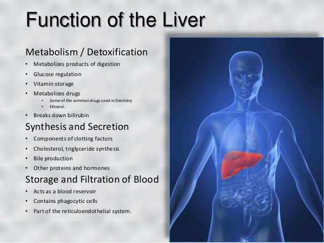 Liver Functions Your Wellness Herbalage